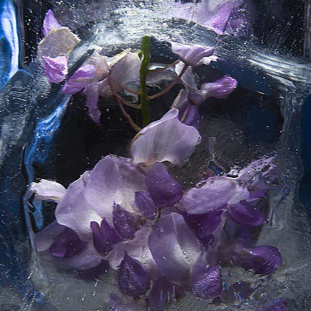 замороженные цветы фото будут