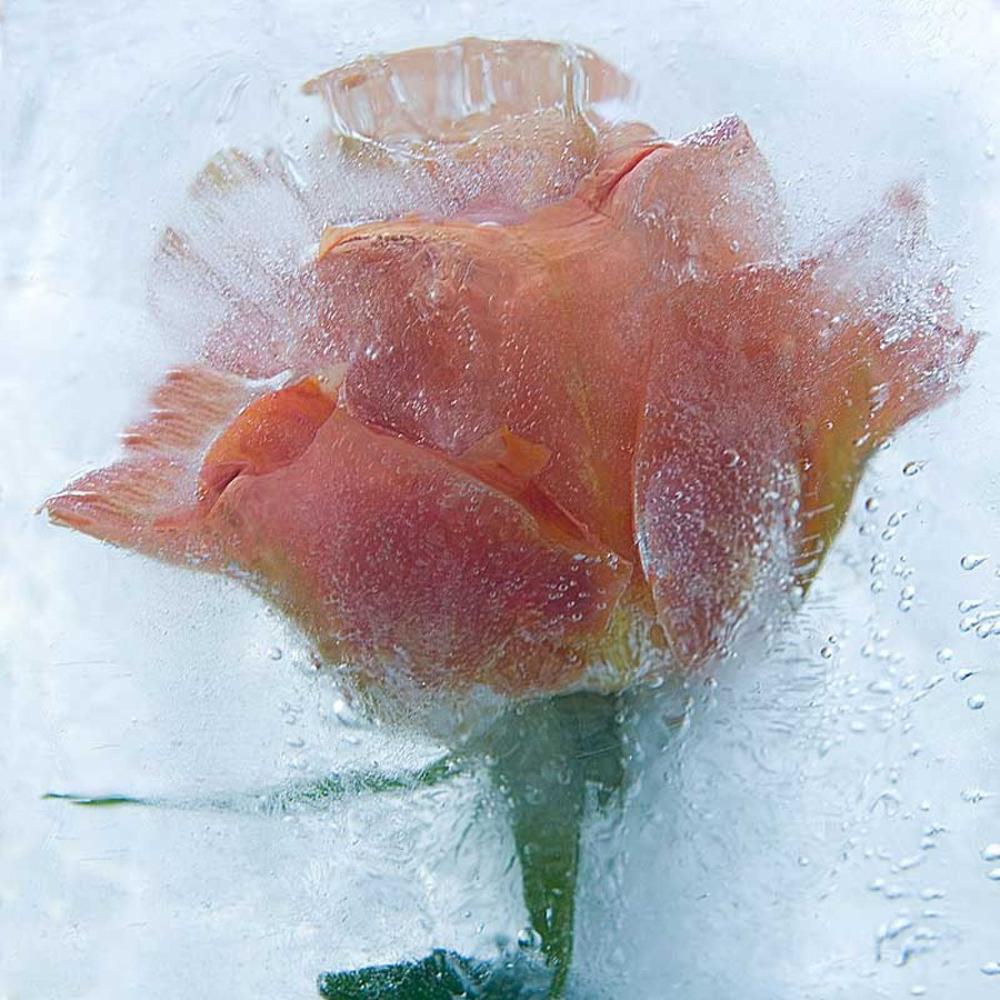 состоянием картинки красивые цветы и лед наличии прицепа