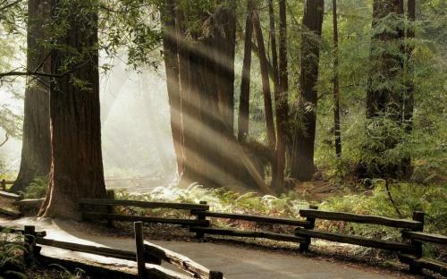 Очень яркая фотоподборка лучей солнца (23 фото)