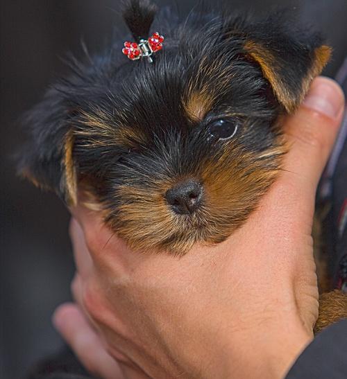 Собачьи радости фотографа Игоря Перфильева (40 фото)