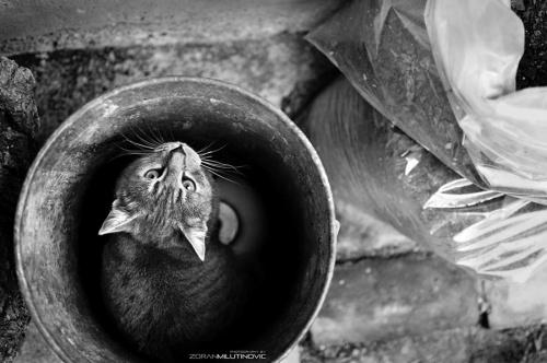 Photographer Zoran Milutinovic (54 фото)