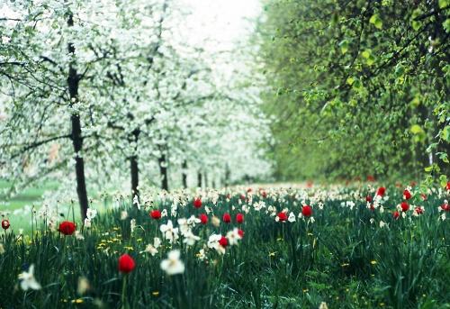 Яркие краски весны (38 фото)