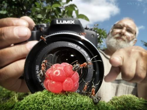 Муравьиные истории. Андрей Павлов (38 фото)