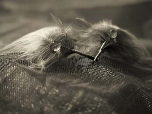 Шикарные макро снимки от Joanna Rzeznikowska (Poland) (77 фото)