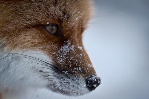 В Мире Животных (51 фото)