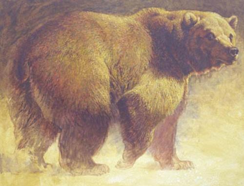 Художник Ezra Tucker - рисунки животных (51 работ)
