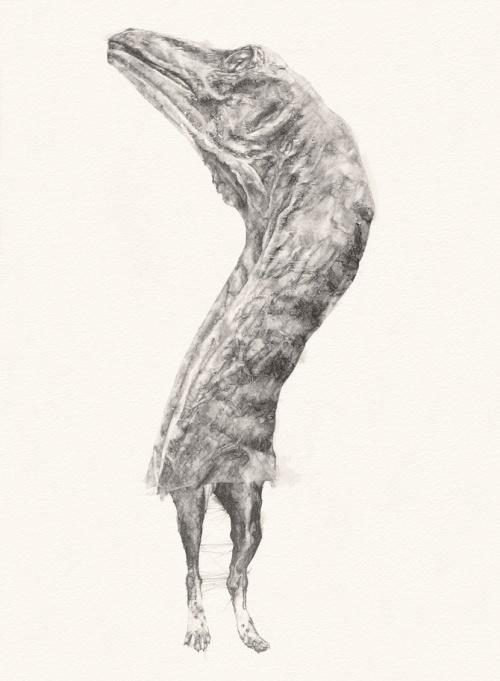 Иллюстратор Amanda Nedham (19 работ)