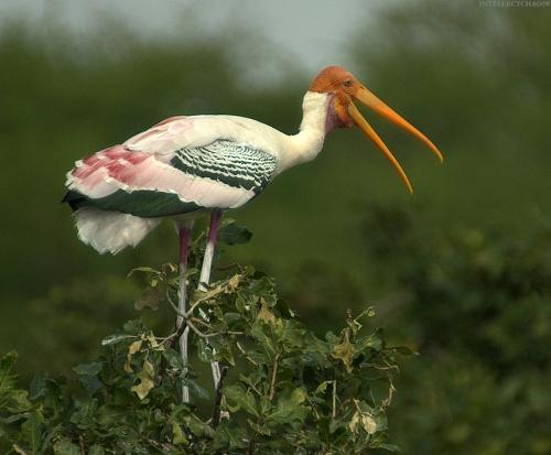 Экзотические птицы (133 фото)