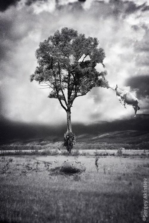 Фотограф Сергей Акинфиев (100 фото)