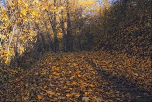 Работы Фотографа Ольги Кулаковой (64 работ)