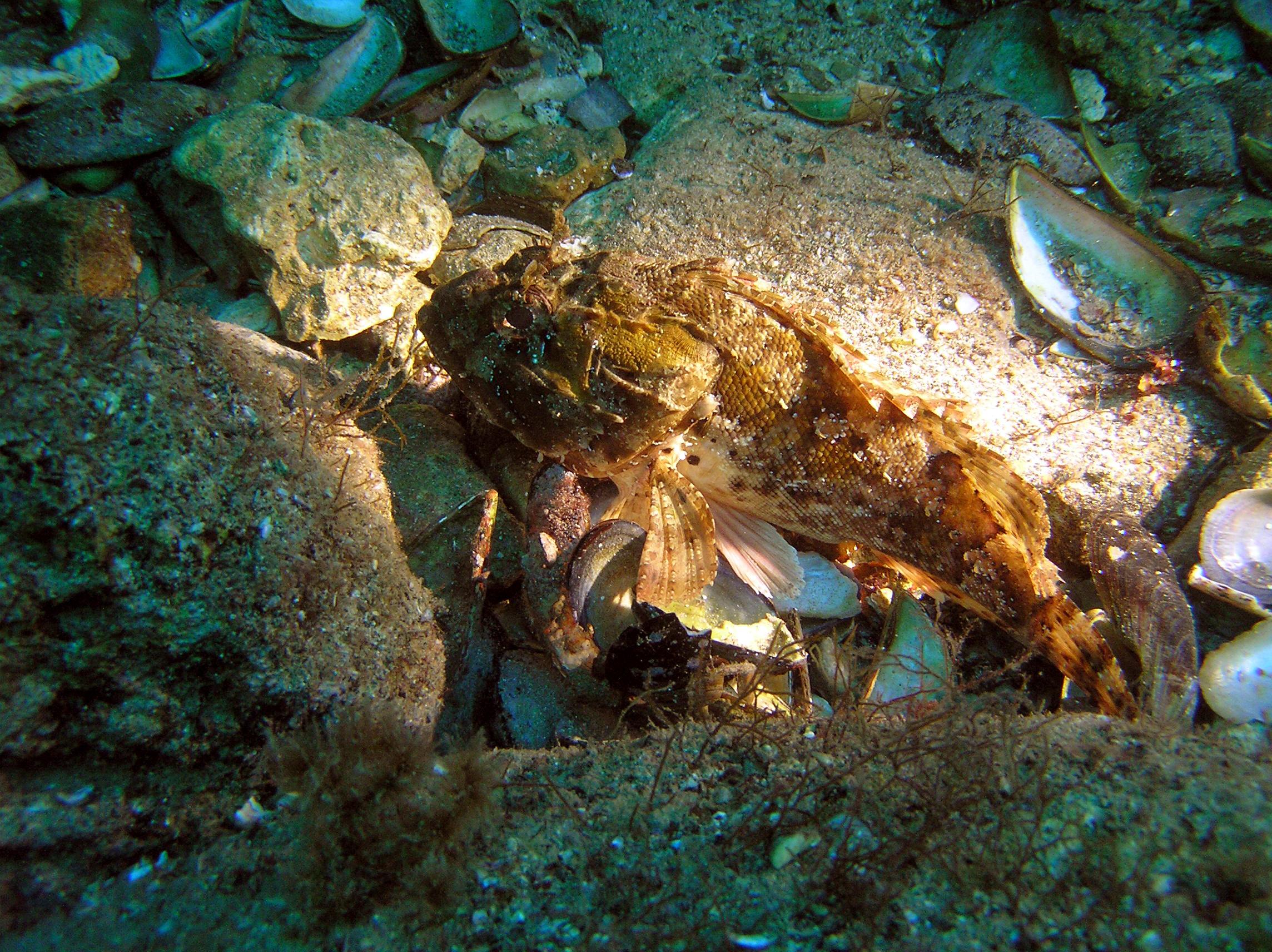 симптомы остеохондроза подводный мир тарханкут крым фото настоящее