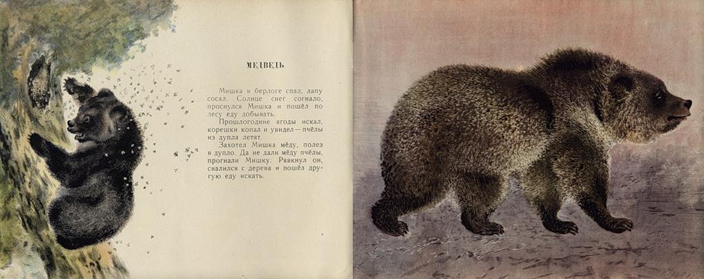 е чарушина медведь рыбак