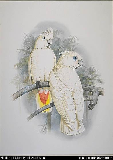 Художник William T. Cooper (116 работ)